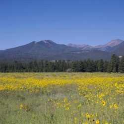 Discover the various landscapes of the state on a Mission Trip or Pilgrimage to Arizona with Wonder Voyage.