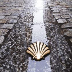 Pilgrims shell on the Camino de Santiago.